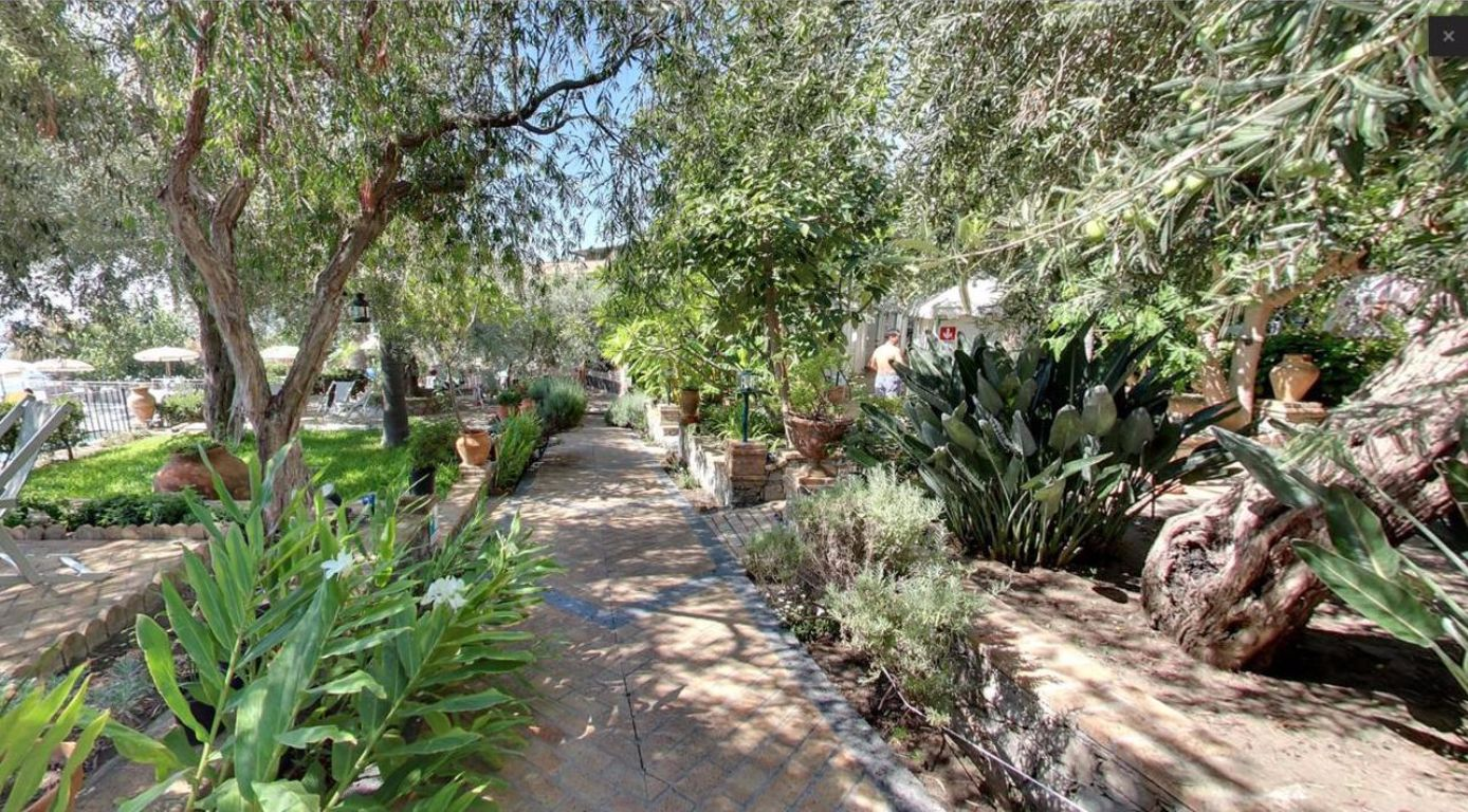 Piante tropicali da giardino piante tropicali da giardino for Piante a poco prezzo
